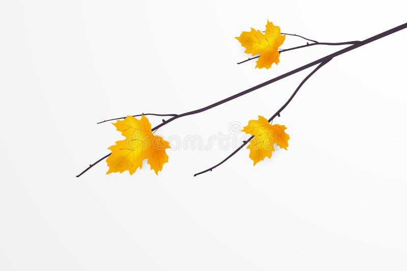 Herbstniederlassung mit den fallenden hellen gelben, goldenen Ahornblättern lokalisiert auf weißem Hintergrund Vase mit trockenen vektor abbildung
