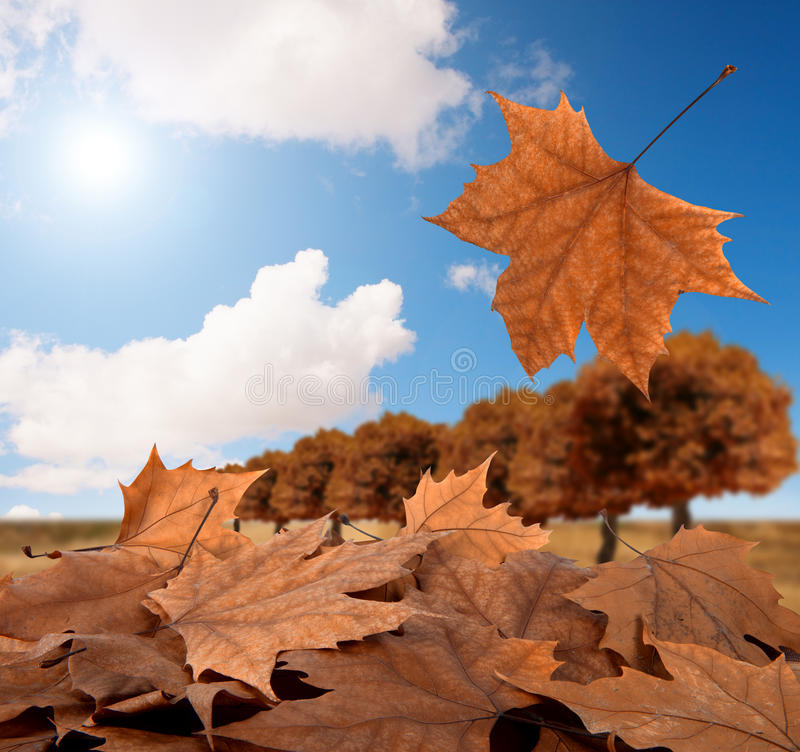 Herbstpanorama lizenzfreie stockfotos
