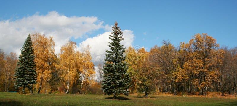 Herbstpark lizenzfreies stockbild