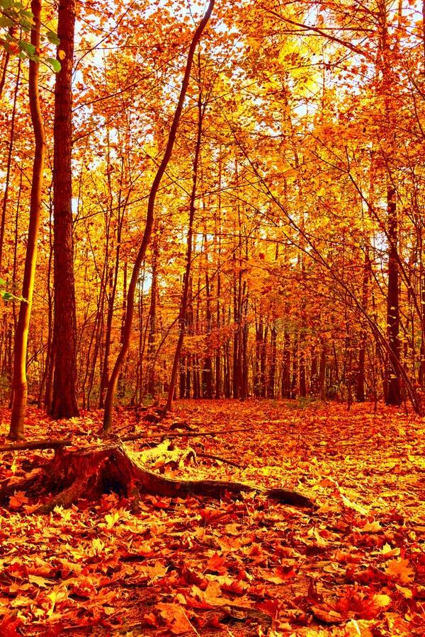 Herbstpark mit gefallenen Bl?ttern lizenzfreies stockfoto
