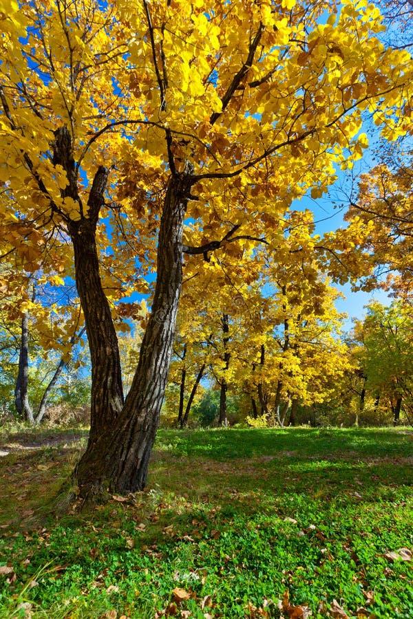 Herbstparkszene lizenzfreie stockbilder