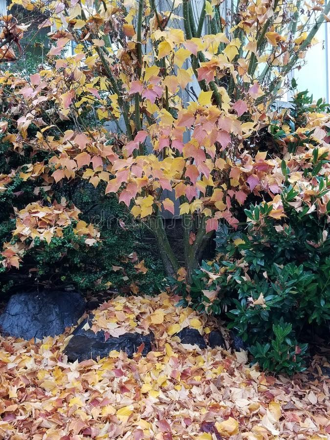 Herbstperfektion stockbilder