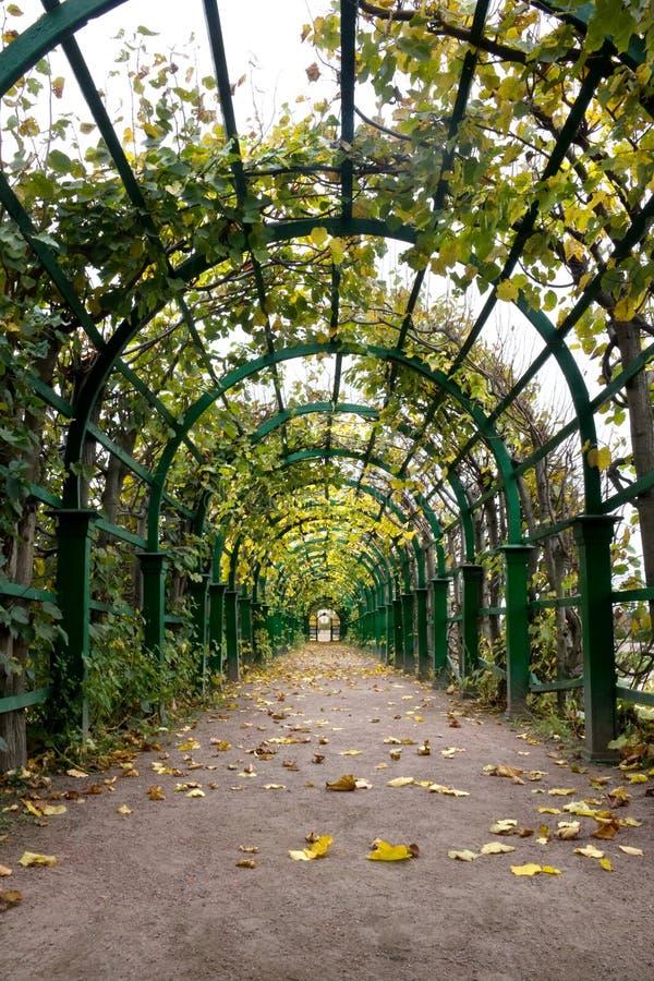 HerbstPergola stockfoto