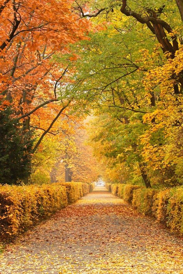 Herbstpfad im Park stockfotografie