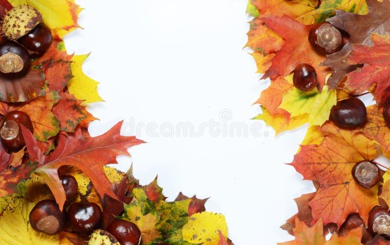 Herbstrahmen lizenzfreie stockfotografie