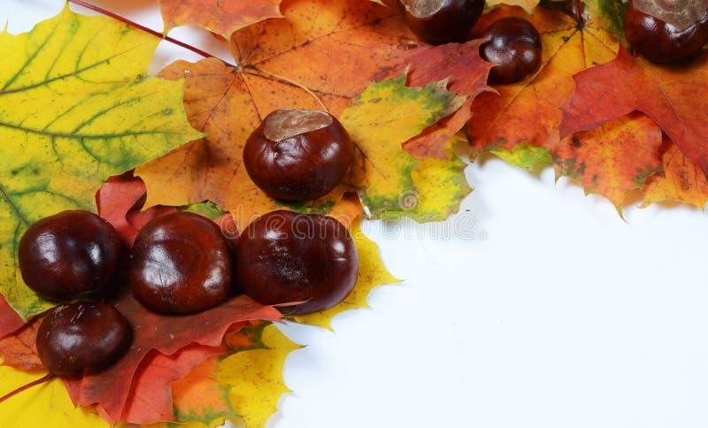 Herbstrahmen lizenzfreies stockbild