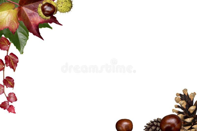 Herbstrahmen, lokalisiert auf Weiß lizenzfreie stockfotografie
