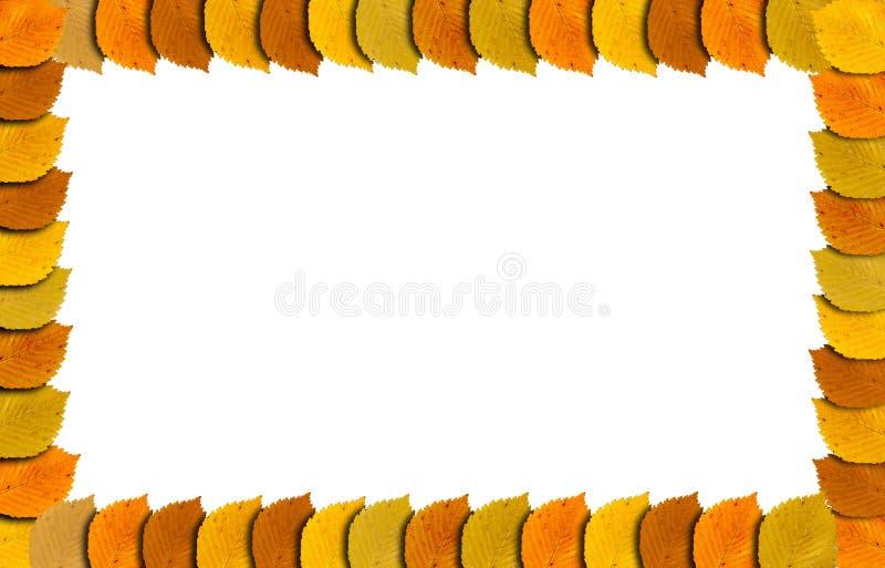 Herbstrahmen mit Herbst färbte Blätter an der Grenze, die auf Weiß lokalisiert wurde lizenzfreie abbildung