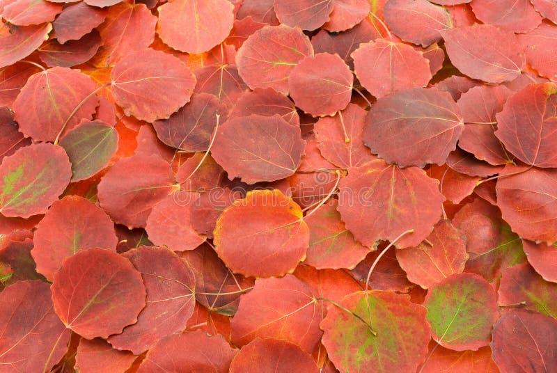 Herbstrot-Blathintergrund lizenzfreie stockfotografie