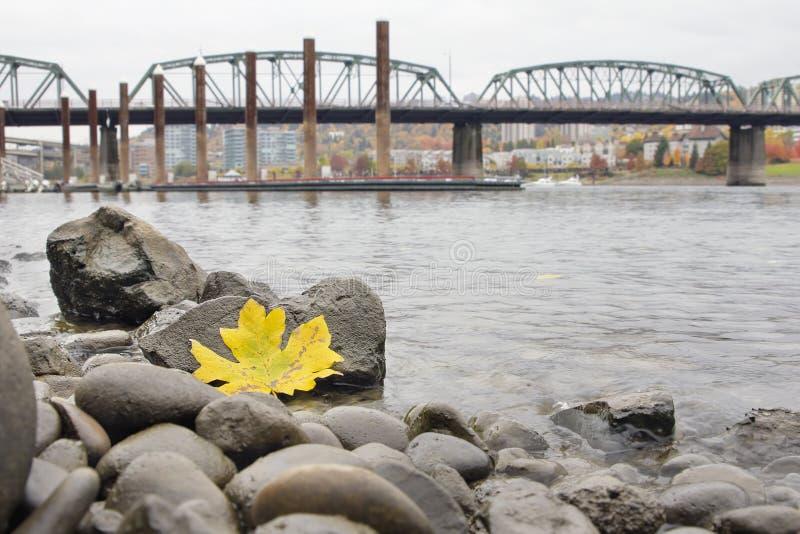 Herbstsaison entlang Fluss Portlands Willamette durch Jachthafen lizenzfreies stockfoto