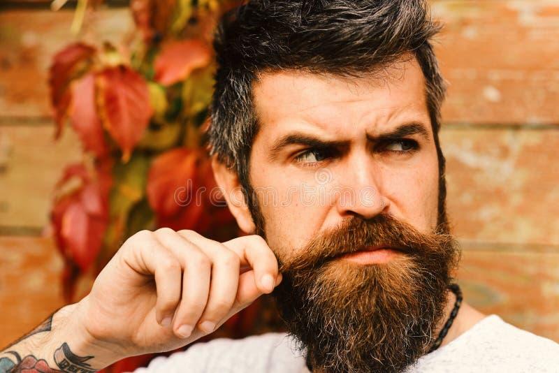 Herbstsaison- und Schönheitskonzept Kerl, der nahe Rotblättern auf Wand aufwirft Macho mit Bart stockbilder
