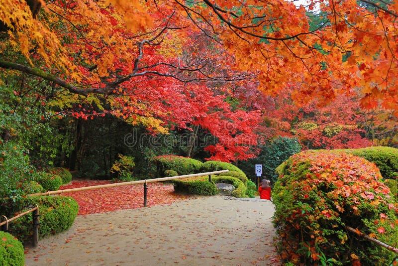 Herbstsaison von Shisen-arbeiten im Garten stockfoto