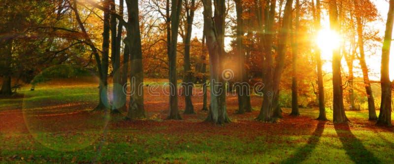 Herbstsonne in einem Wald mit bunten Blättern stockfoto