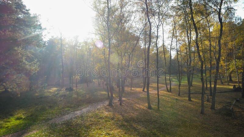 Herbstsonnenuntergang in Misty Forest stockfotografie