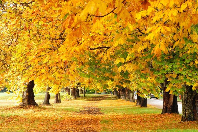 Herbstspur im Park stockbild