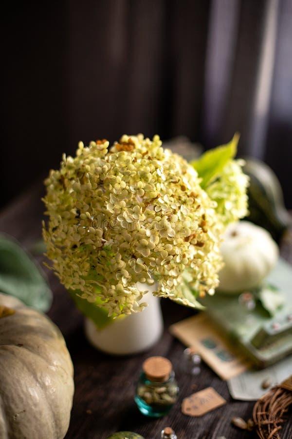 Herbststillleben auf rustikalem Holztisch mit grünen Kürbisen, Vase mit Hortensie, Schüssel mit Samen, alte Flaschen lizenzfreie stockbilder