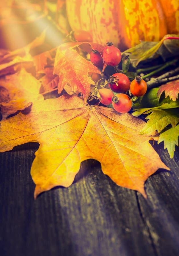 Herbststillleben mit Blättern, wilden Hüften und Kürbis auf rustikalem hölzernem Hintergrund lizenzfreies stockfoto