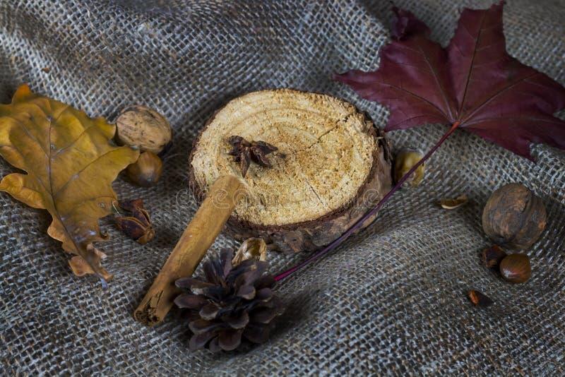 Herbststillleben mit Blatt, Nüssen und Stück Holz auf braunem tollem lizenzfreies stockfoto
