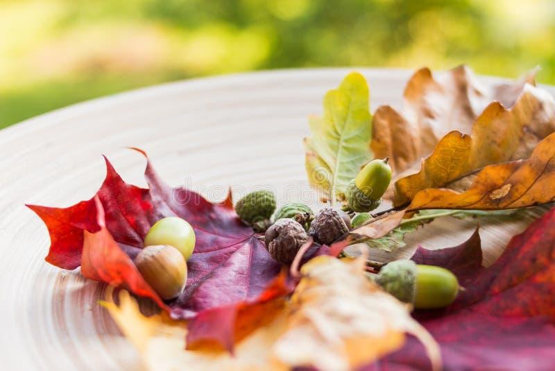 Herbststillleben mit Kegeln, Eicheln, Nüssen und gefallenen Blättern Selektiver Fokus Jahreszeitzusammensetzung mit bunten Blätte lizenzfreies stockbild