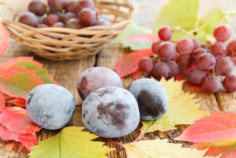 Herbststillleben mit Pflaumen, Trauben und Weidenkorb, Grün, y stockbild