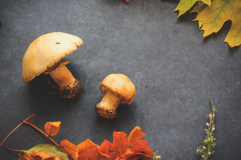 Herbststillleben von Blättern am Vorabend Halloweens stockfotos