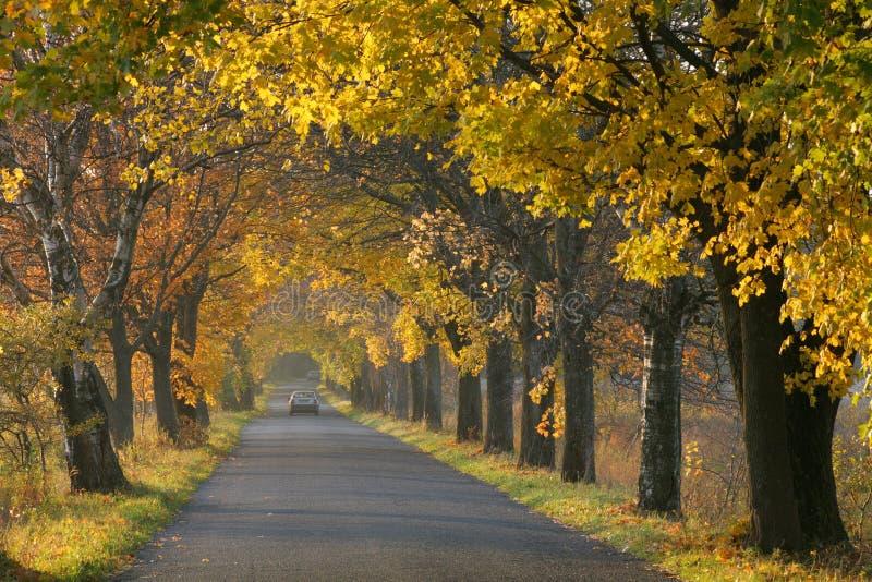 Herbststraße. stockbilder