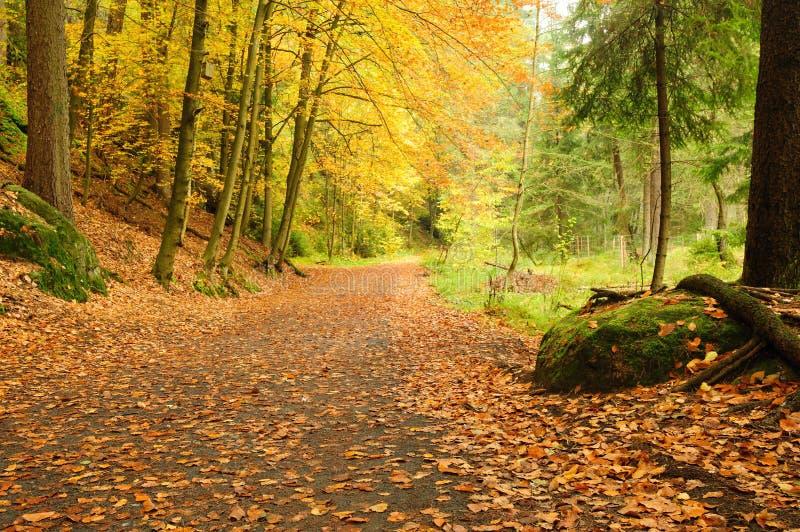 Herbststraße mit Blättern stockfoto