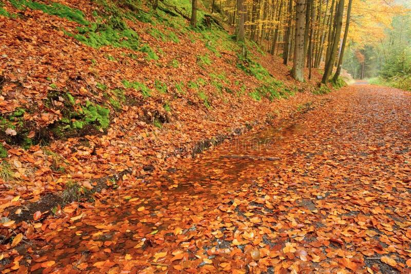 Herbststraße mit Blättern lizenzfreies stockbild