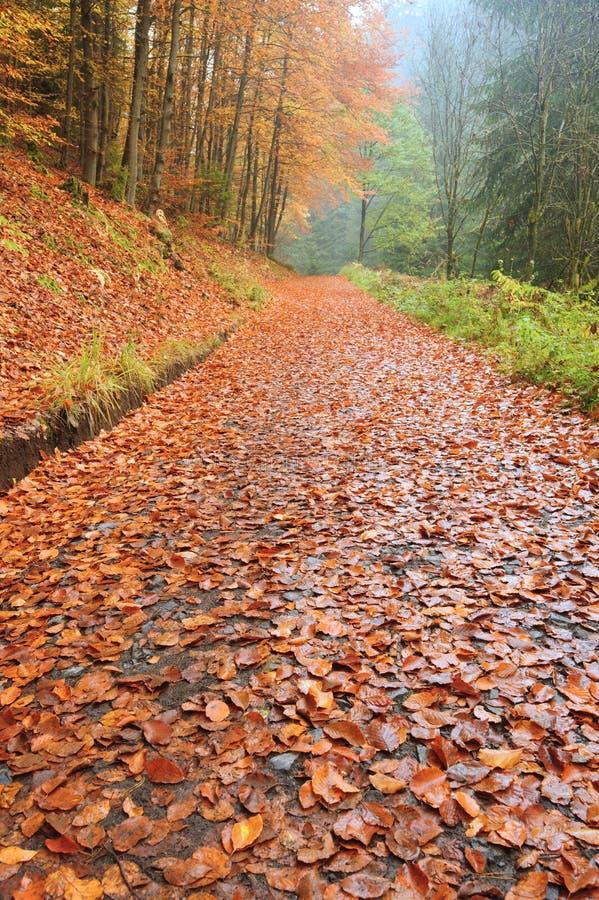 Herbststraße mit Blättern stockfotos