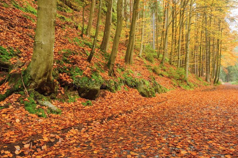 Herbststraße mit Blättern lizenzfreie stockbilder