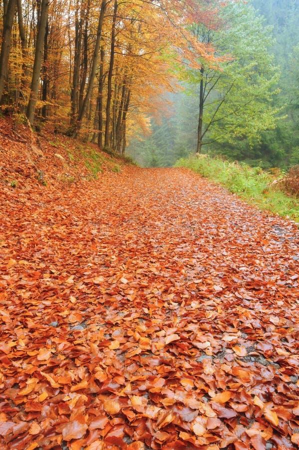 Herbststraße mit Blättern stockbilder