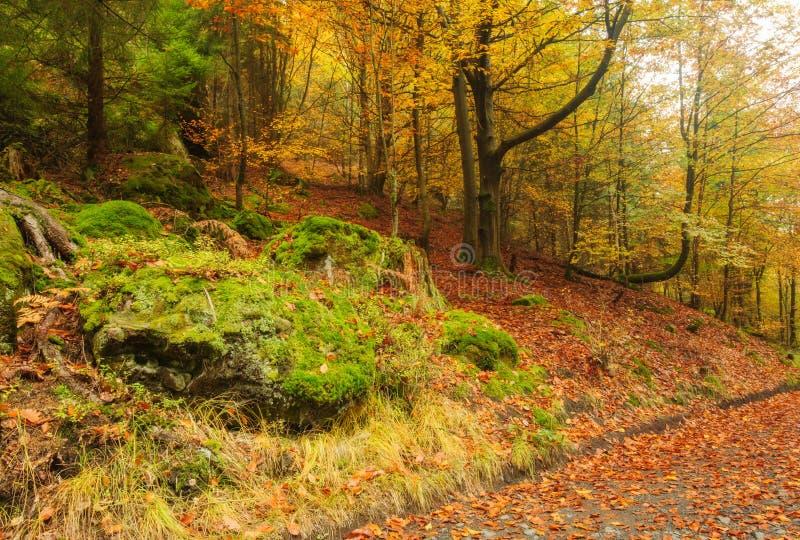 Herbststraße mit Blättern stockbild
