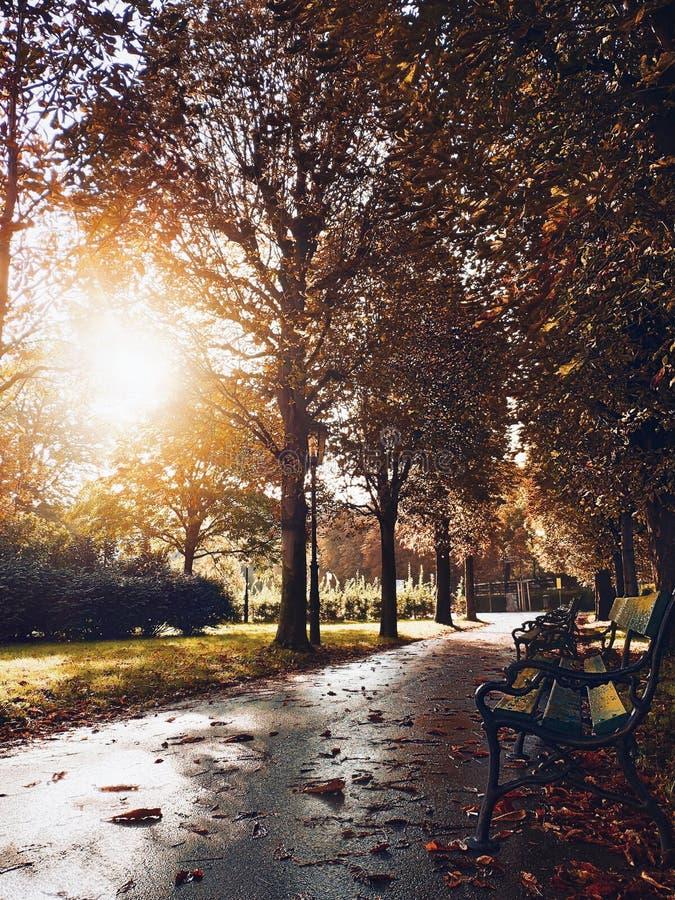 Herbststraße mit Blättern nach Regen Sonniger Tag auf Allee Gasse mit Bäumen, Lampe und Bänke lizenzfreie stockbilder