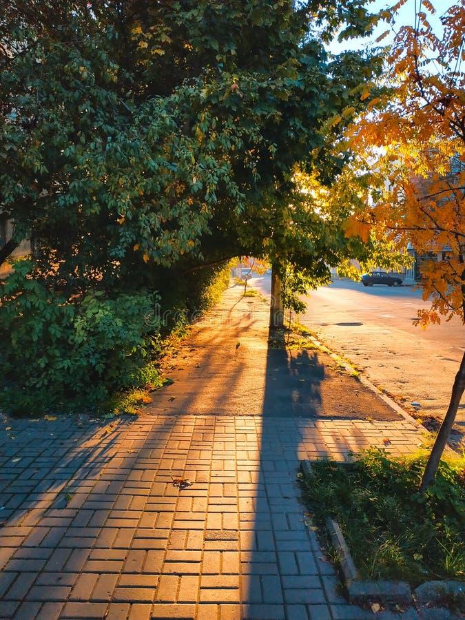 Herbststraße mit Blättern Sonniger Tag auf Allee Gasse mit Bäumen, ndian Sommer lizenzfreie stockfotos