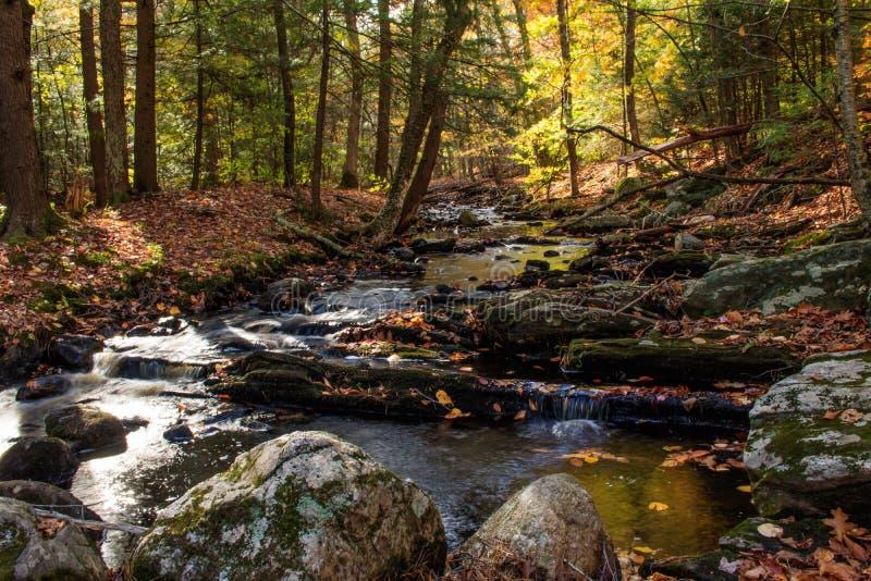 Herbststrom im Enders-Zustands-Wald lizenzfreie stockfotografie