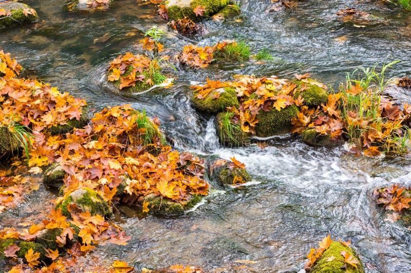 Herbststrom von Gebirgsfluss mit Steinen und buntem Herbstlaub stockfotos