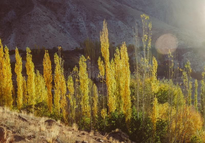 Herbstszene in Hunza-Tal Gilgit baltistan, Pakistan stockbilder
