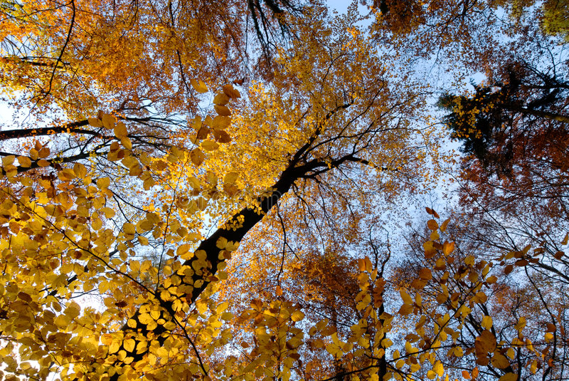 Herbstszene im Wald lizenzfreie stockbilder