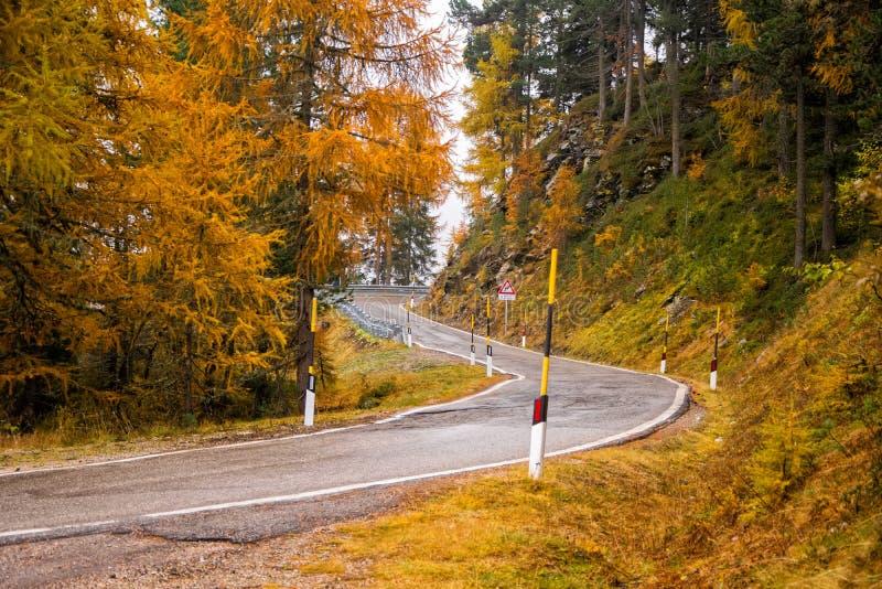 Herbstszene mit Straße im Alpenwald stockfotografie
