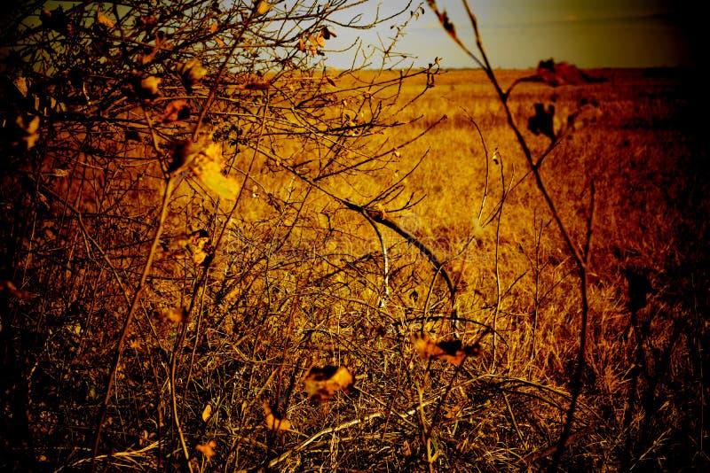 Herbsttag auf dem Feld lizenzfreie stockbilder