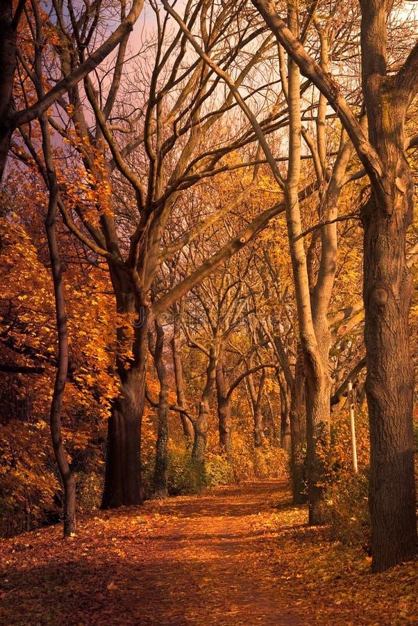 Herbsttal stockbilder