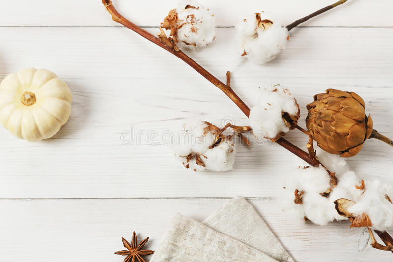 Herbsttrockenblumen und -kürbis auf weißem Holz, Hintergrund lizenzfreies stockfoto