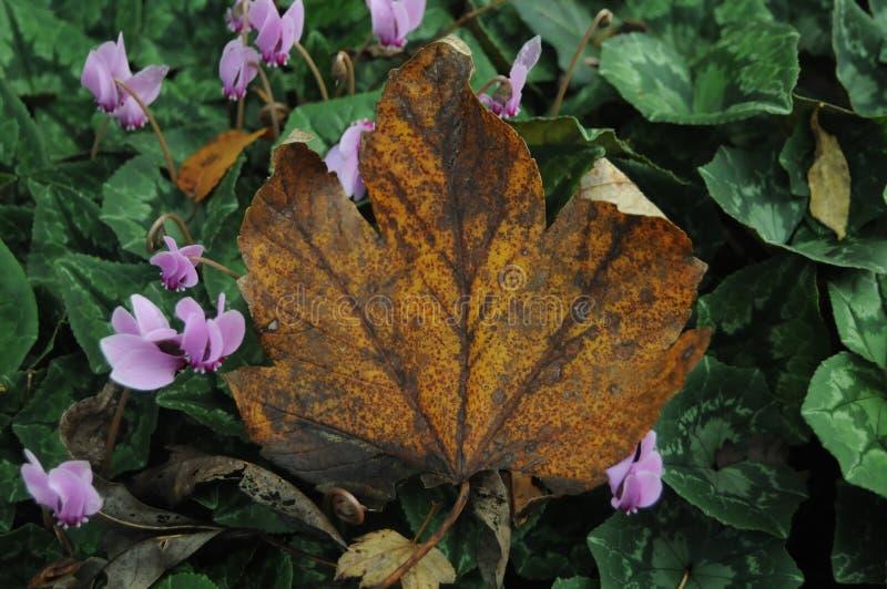 Herbsturlaub lizenzfreie stockfotos