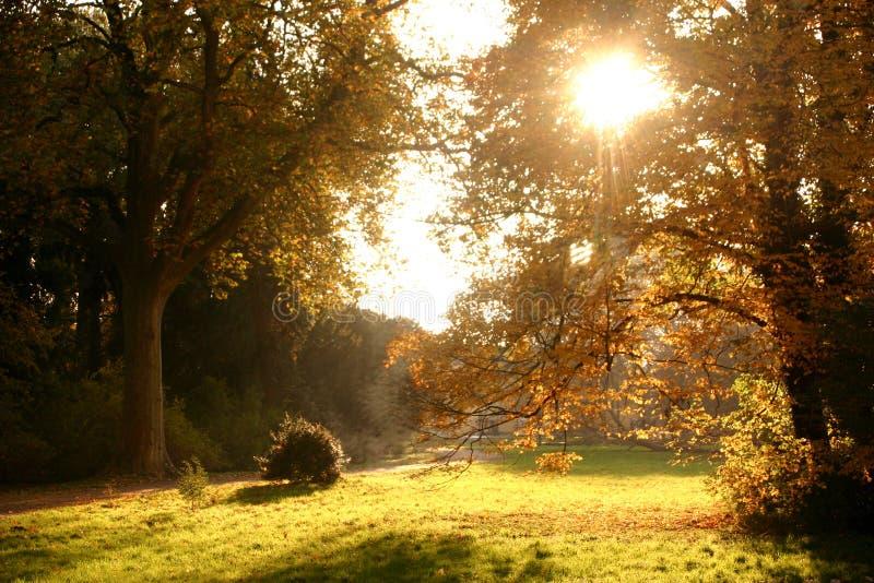 Herbstwald 1 stockbilder