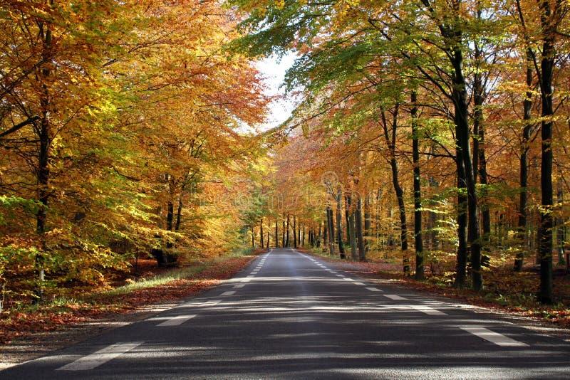 Herbstwald stockbilder
