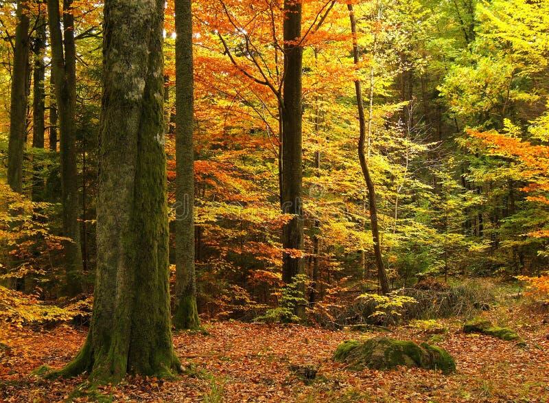 Herbstwald lizenzfreies stockfoto