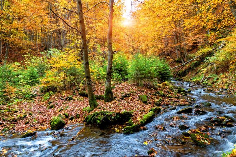 Herbstwald in den Bergen stockfoto