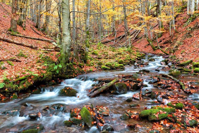 Herbstwald in den Bergen stockbilder