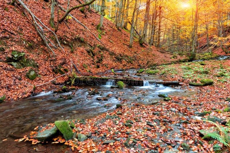 Herbstwald in den Bergen lizenzfreie stockfotos