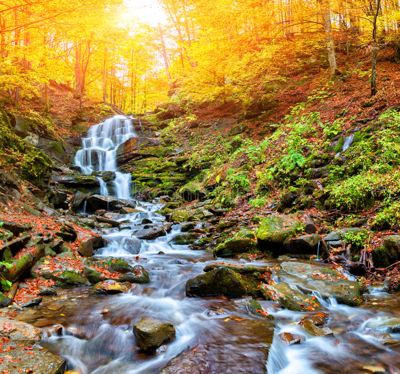 Herbstwald in den Bergen stockfotografie